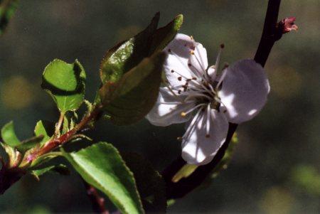 http://www.southbristolviews.com/pics/Spring/Flowers/Flower1.jpg